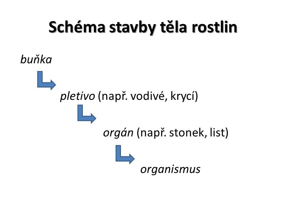 Schéma stavby těla rostlin buňka pletivo (např. vodivé, krycí) orgán (např. stonek, list) organismus