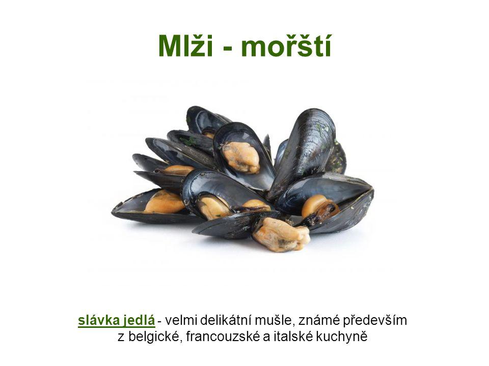 Mlži - mořští slávka jedlá - velmi delikátní mušle, známé především z belgické, francouzské a italské kuchyně