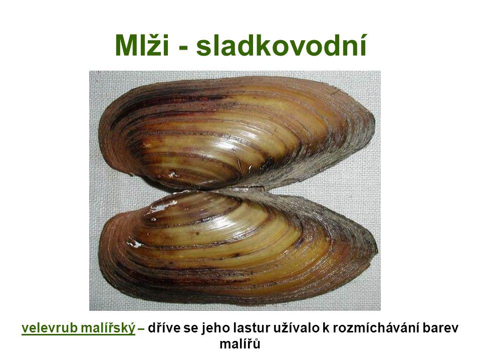 Mlži - sladkovodní perlorodka říční – u nás vzácná (Šumava, Českomoravská vrchovina)
