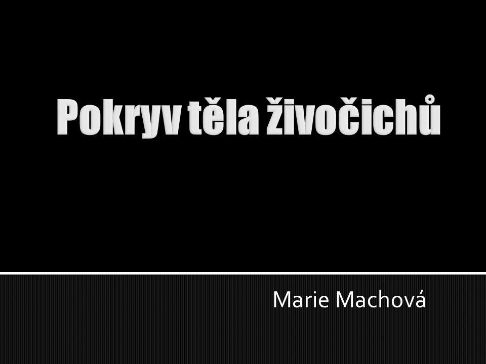 Marie Machová