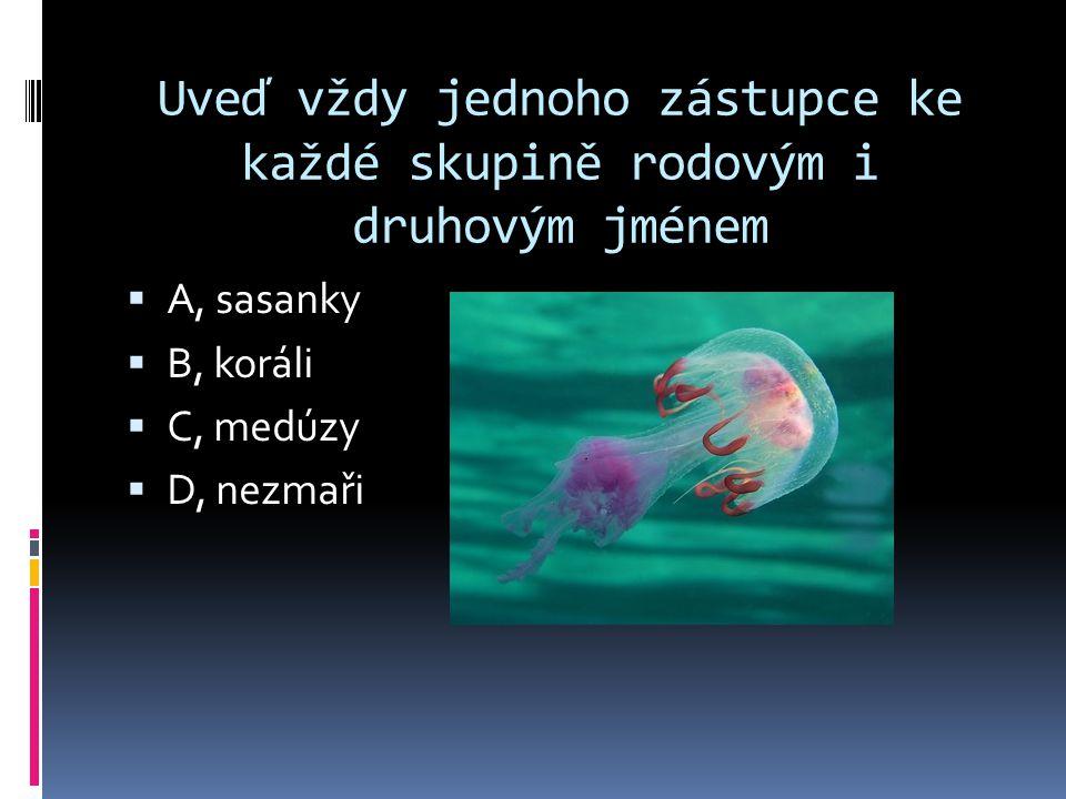 Uveď vždy jednoho zástupce ke každé skupině rodovým i druhovým jménem  A, sasanky  B, koráli  C, medúzy  D, nezmaři