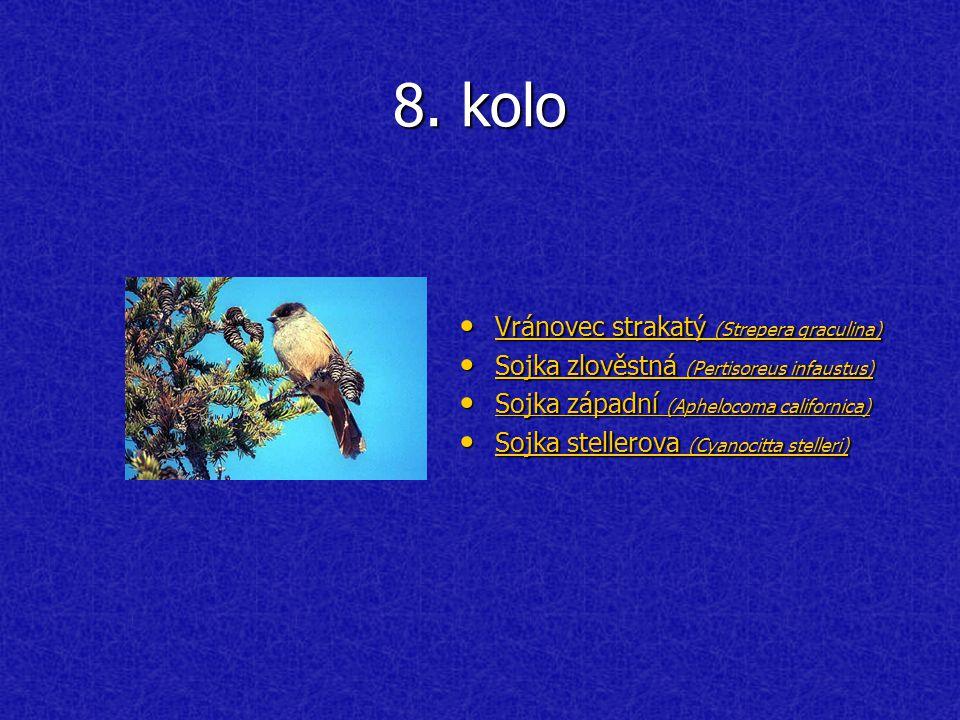 8. kolo Vránovec strakatý (Strepera graculina) Vránovec strakatý (Strepera graculina) Vránovec strakatý (Strepera graculina) Vránovec strakatý (Strepe