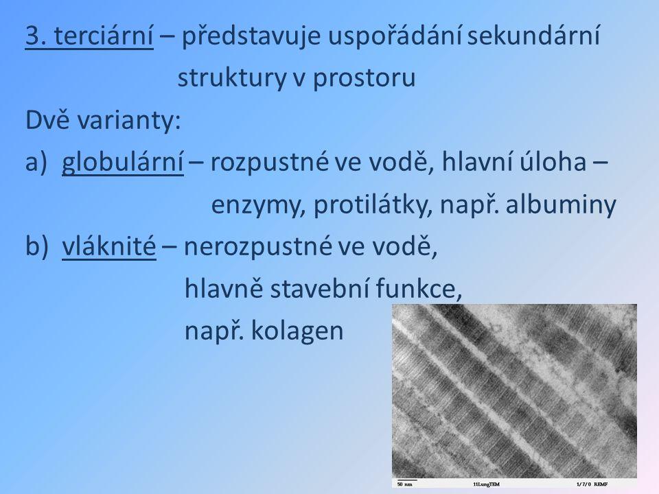 3. terciární – představuje uspořádání sekundární struktury v prostoru Dvě varianty: a)globulární – rozpustné ve vodě, hlavní úloha – enzymy, protilátk