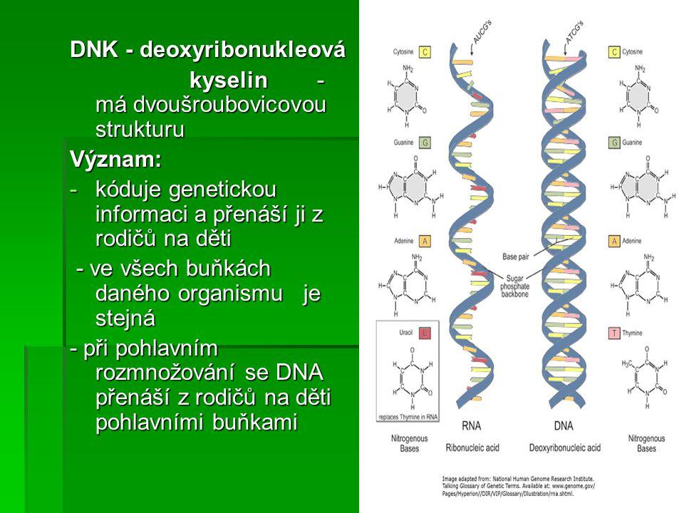 DNK - deoxyribonukleová kyselin - má dvoušroubovicovou strukturu kyselin - má dvoušroubovicovou strukturuVýznam: -kóduje genetickou informaci a přenáš