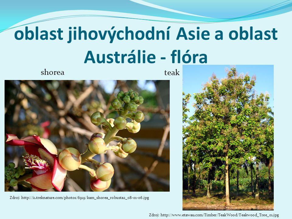 oblast jihovýchodní Asie a oblast Austrálie - flóra shorea Zdroj: http://i1.treknature.com/photos/6919/kam_shorea_robusta2_08-01-06.jpg Zdroj: http://