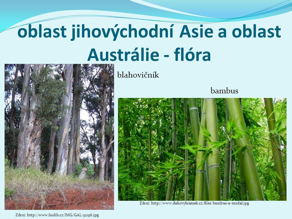 oblast jihovýchodní Asie a oblast Austrálie - flóra blahovičník Zdroj: http://www.biolib.cz/IMG/GAL/51296.jpg bambus Zdroj: http://www.duhovykramek.cz