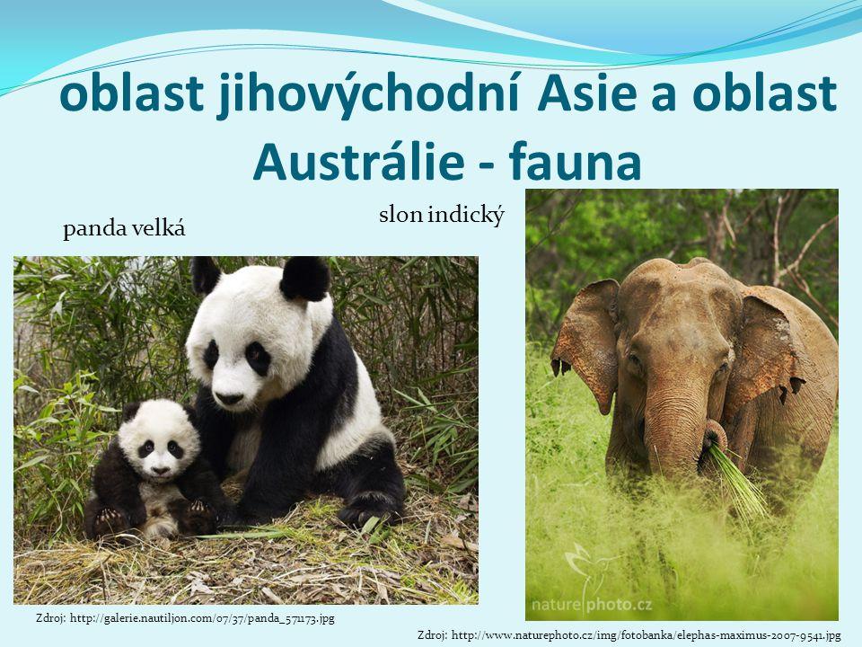 oblast jihovýchodní Asie a oblast Austrálie - fauna Zdroj: http://galerie.nautiljon.com/07/37/panda_571173.jpg panda velká Zdroj: http://www.naturepho