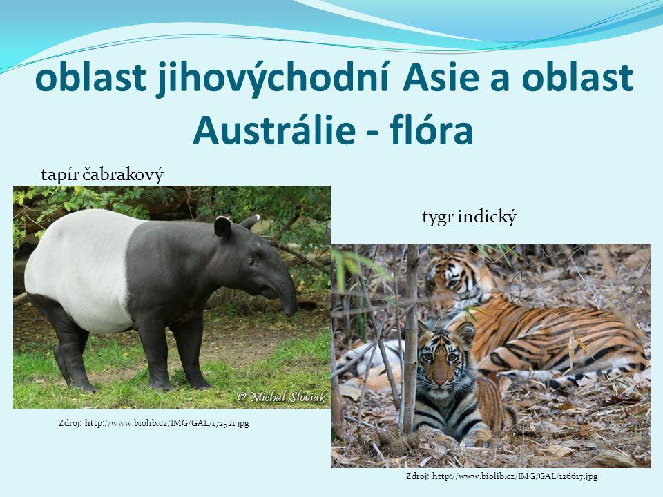 oblast jihovýchodní Asie a oblast Austrálie - flóra Zdroj: http://www.biolib.cz/IMG/GAL/172521.jpg tapír čabrakový tygr indický Zdroj: http://www.biol