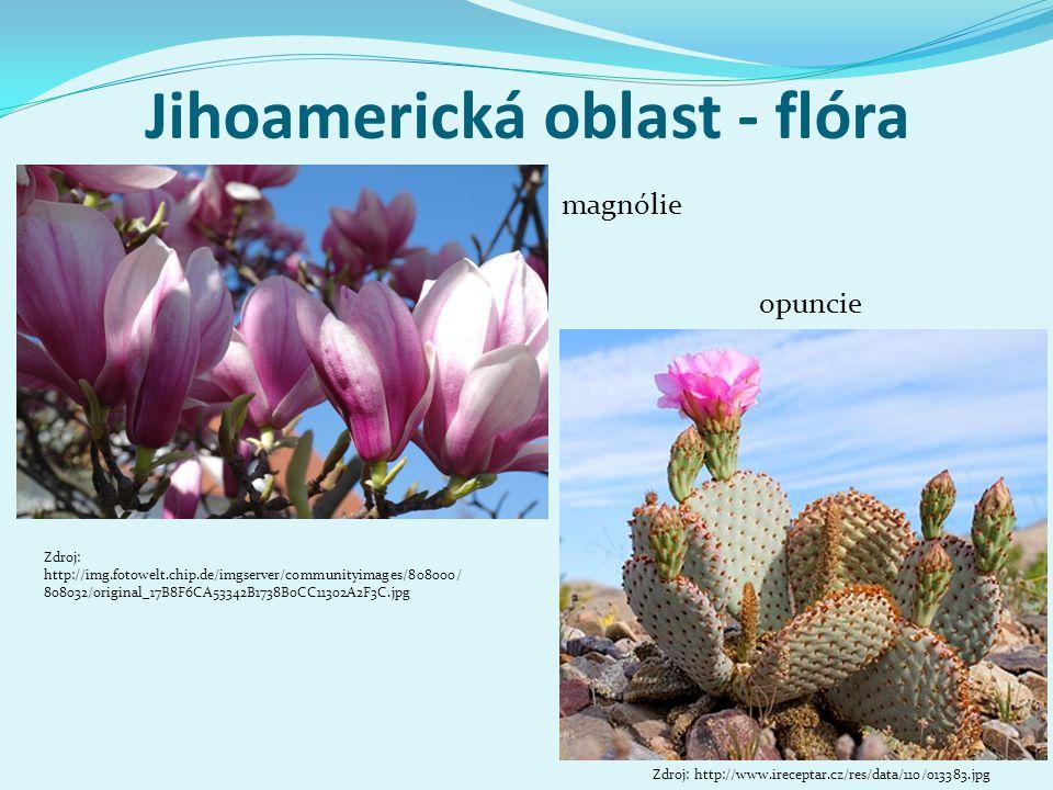 Jihoamerická oblast - flóra Zdroj: http://img.fotowelt.chip.de/imgserver/communityimages/808000/ 808032/original_17B8F6CA53342B1738B0CC11302A2F3C.jpg