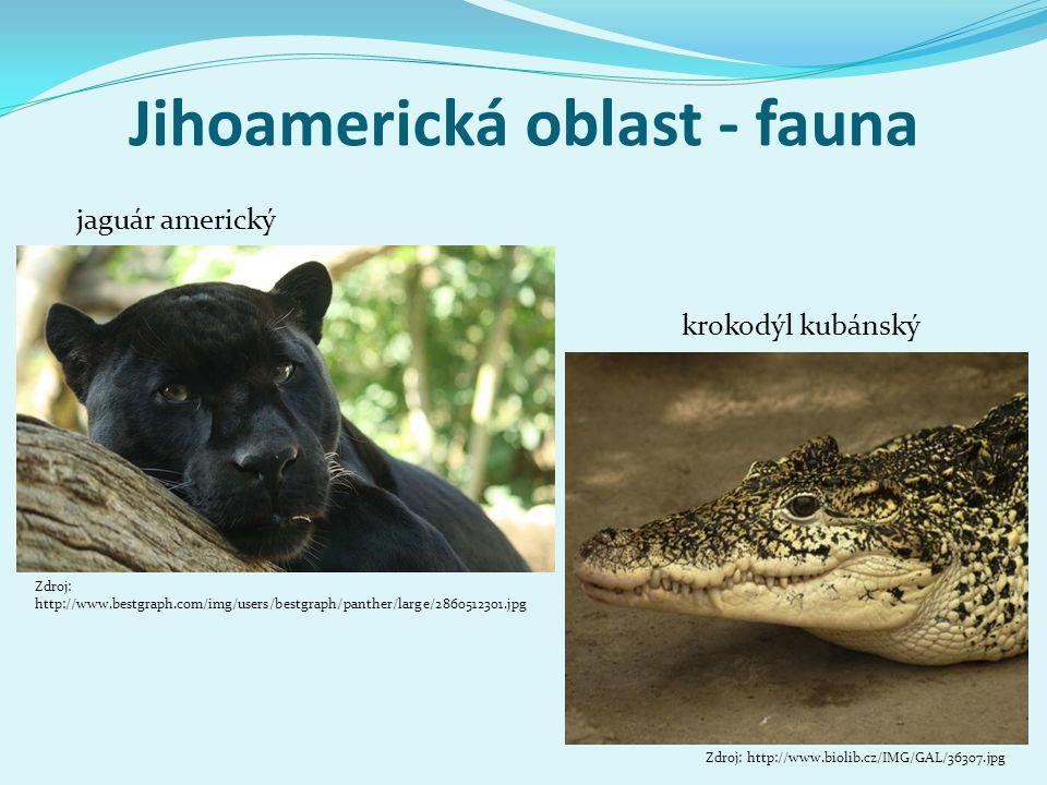 Jihoamerická oblast - fauna Zdroj: http://www.bestgraph.com/img/users/bestgraph/panther/large/2860512301.jpg jaguár americký krokodýl kubánský Zdroj: