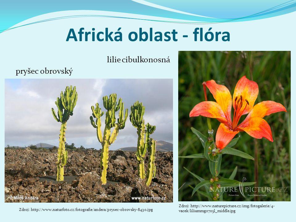 Africká oblast - flóra pryšec obrovský Zdroj: http://www.naturfoto.cz/fotografie/andera/prysec-obrovsky-8430.jpg lilie cibulkonosná Zdroj: http://www.