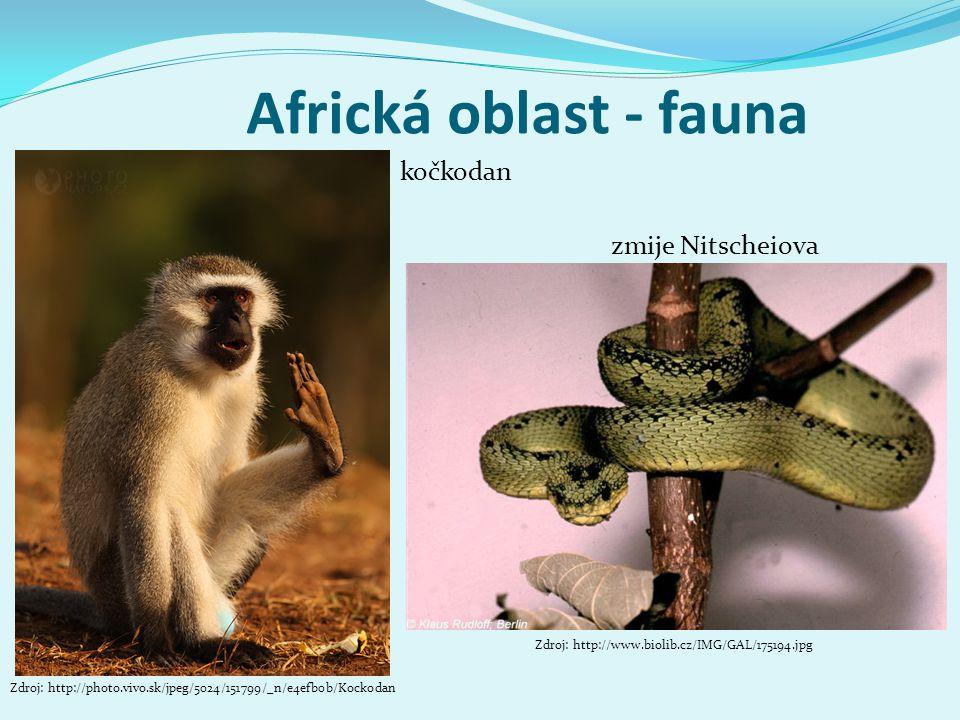 Africká oblast - fauna Zdroj: http://photo.vivo.sk/jpeg/5024/151799/_n/e4efb0b/Kockodan kočkodan zmije Nitscheiova Zdroj: http://www.biolib.cz/IMG/GAL