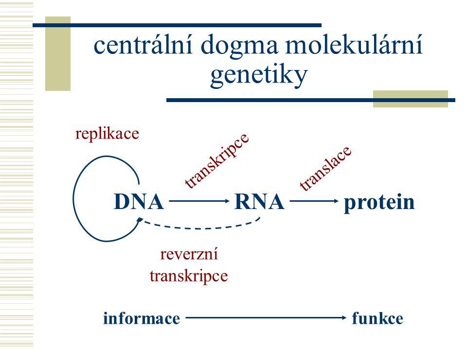 DNARNAprotein transkripce reverzní transkripce translace replikace informacefunkce centrální dogma molekulární genetiky