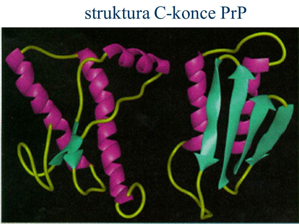 struktura C-konce PrP