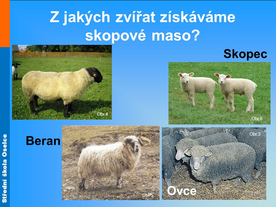 Střední škola Oselce Obr.3 Obr.8 Z jakých zvířat získáváme skopové maso.
