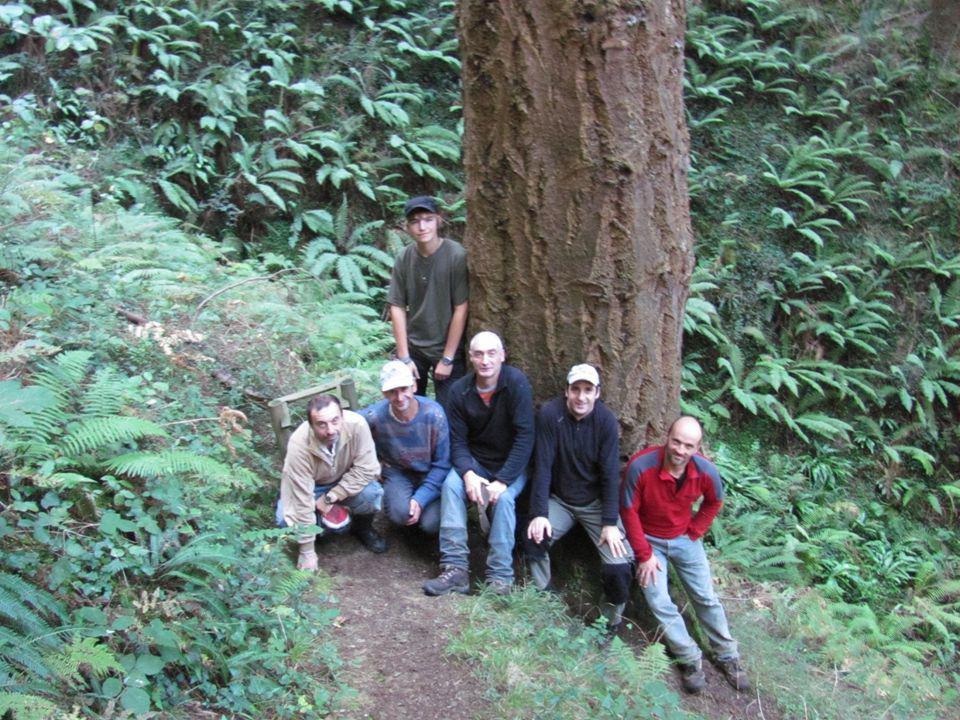 Nějakou dobu jsme pracovali v lesních školkách