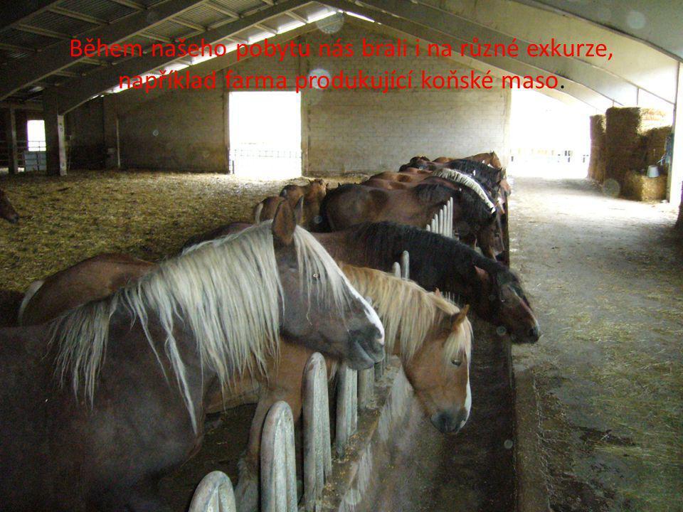Během našeho pobytu nás brali i na různé exkurze, například farma produkující koňské maso.