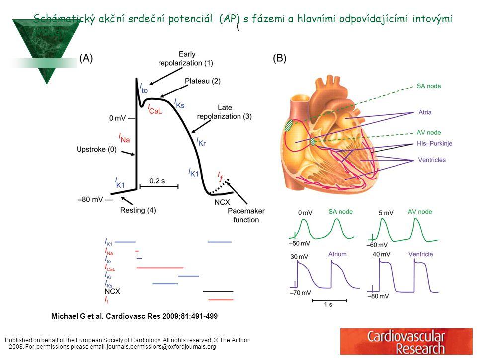 A schematic diagram showing the changes in Ca2+ handling and contractility and the potential compensatory function of ion-channel remodelling that causes action potential (AP) duration (APD) prolongation in congestive heart failure  (A) A normální srdeční akční potenciál (AP) spolu se změnami aktivity volného intracelulárního Ca++  (B) Ca2+ koncentrace a kontrakce buněk selhávajícího srdce vyznačeno zelenými liniemi.