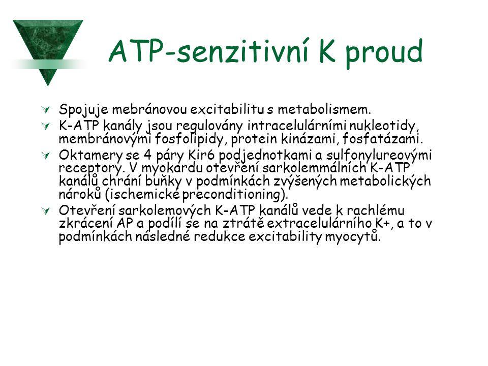 ATP-senzitivní K proud  Spojuje mebránovou excitabilitu s metabolismem.  K-ATP kanály jsou regulovány intracelulárními nukleotidy, membránovými fosf