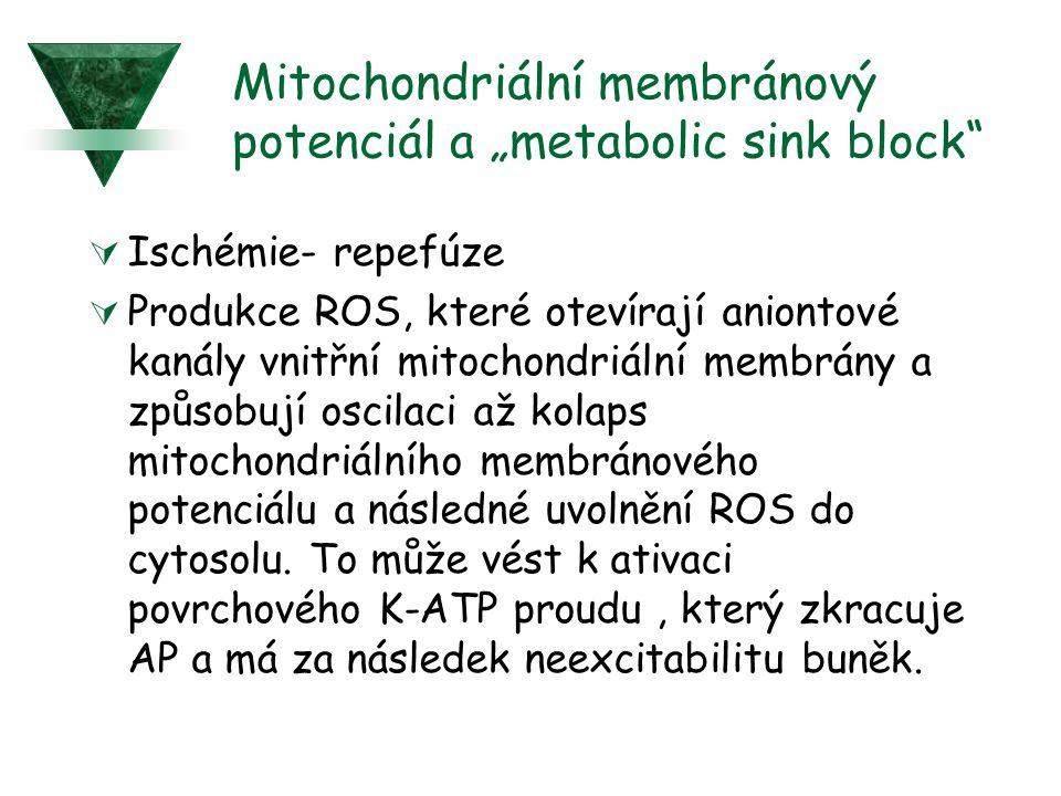 """Mitochondriální membránový potenciál a """"metabolic sink block""""  Ischémie- repefúze  Produkce ROS, které otevírají aniontové kanály vnitřní mitochondr"""