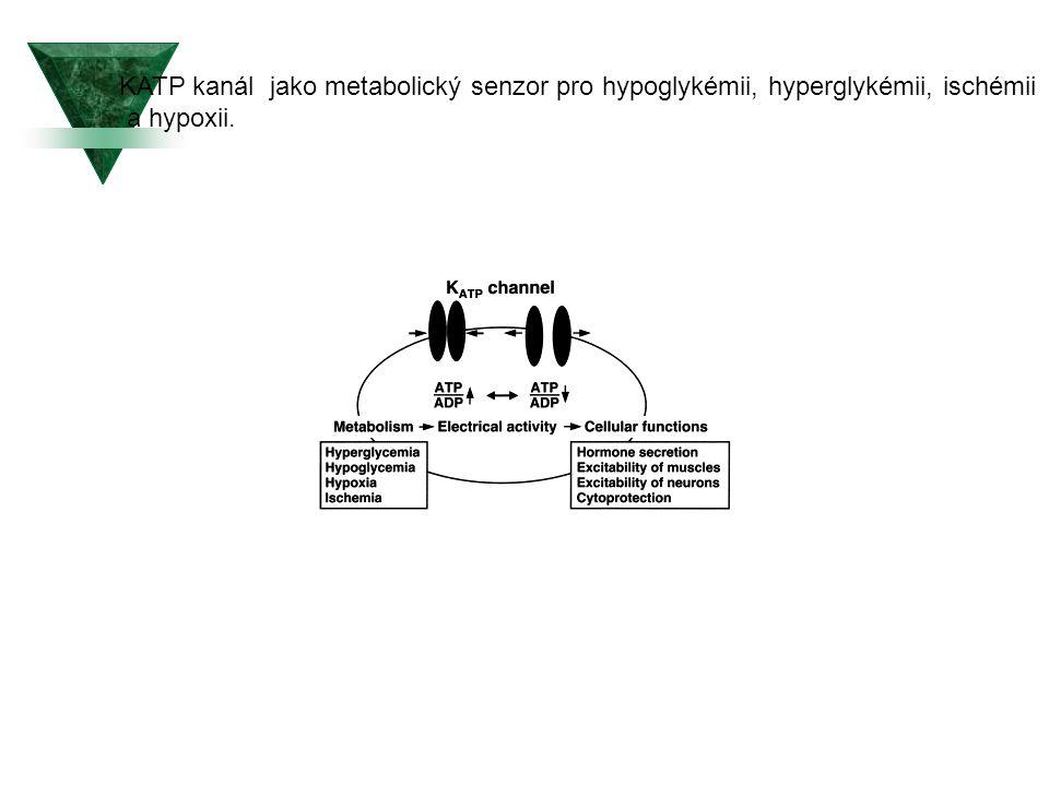KATP kanál jako metabolický senzor pro hypoglykémii, hyperglykémii, ischémii a hypoxii.