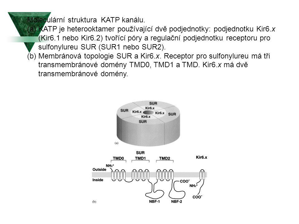 Moleculární struktura KATP kanálu. (a)KATP je heterooktamer používající dvě podjednotky: podjednotku Kir6.x (Kir6.1 nebo Kir6.2) tvořící póry a regula