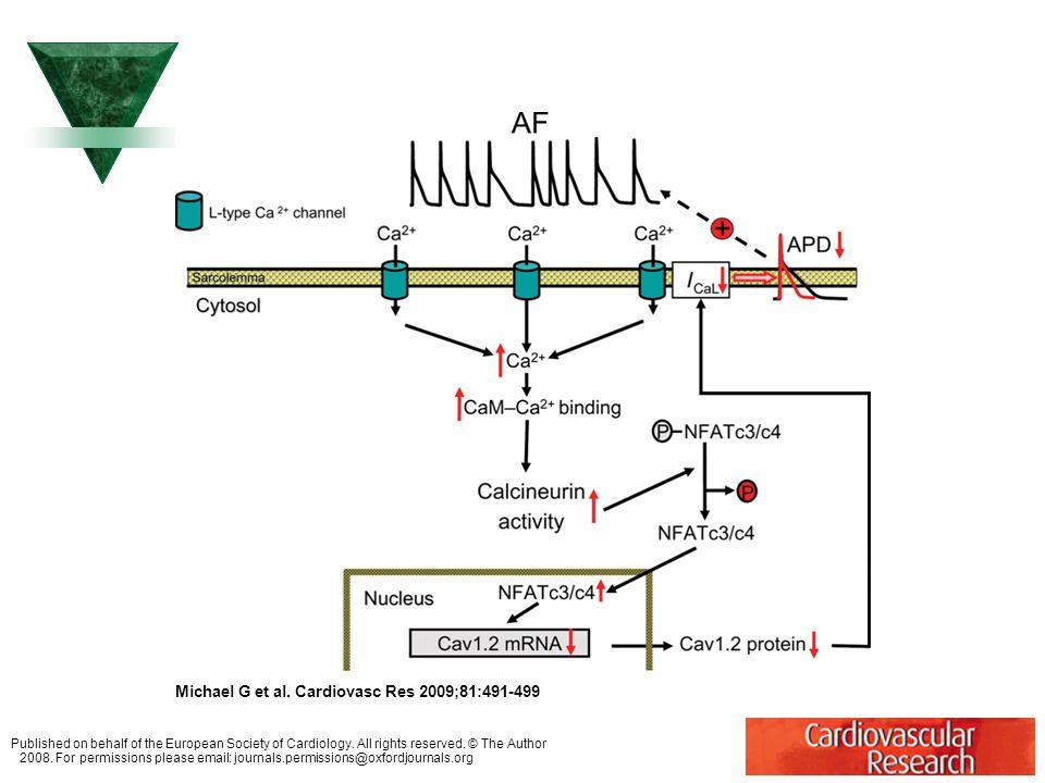 Redukce funkce Ca++ proudu typu L u síňové fibrilace (AF). Michael G et al. Cardiovasc Res 2009;81:491-499 Published on behalf of the European Society