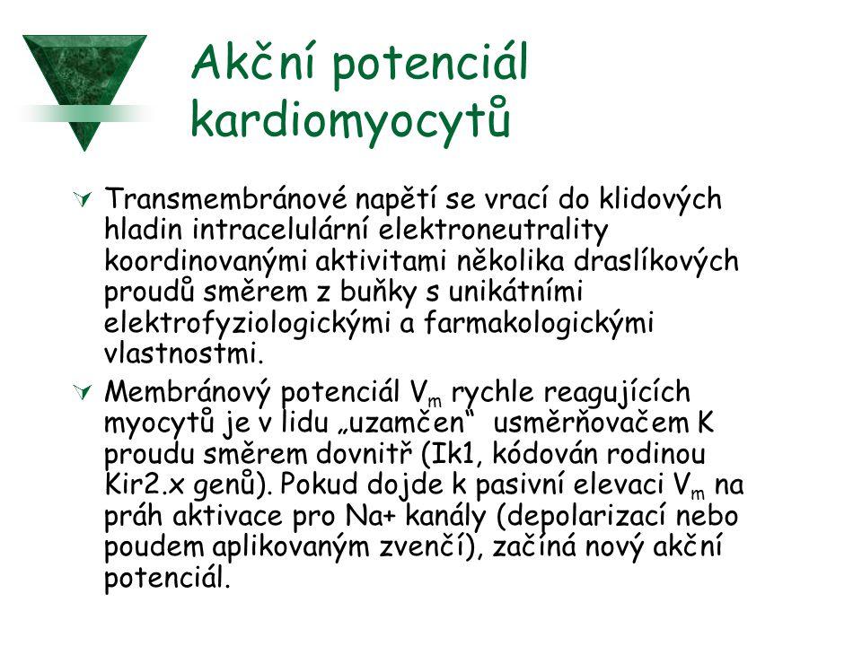 Účastníci anizotropického reentry u srdečního infarktu (MI).