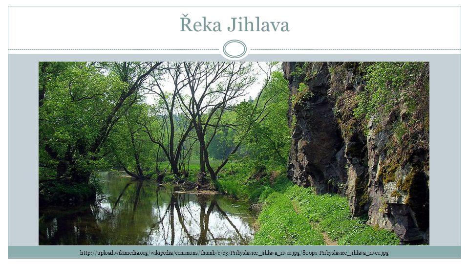 Řeka Jihlava http://upload.wikimedia.org/wikipedia/commons/thumb/c/c3/Pribyslavice_jihlava_river.jpg/800px-Pribyslavice_jihlava_river.jpg