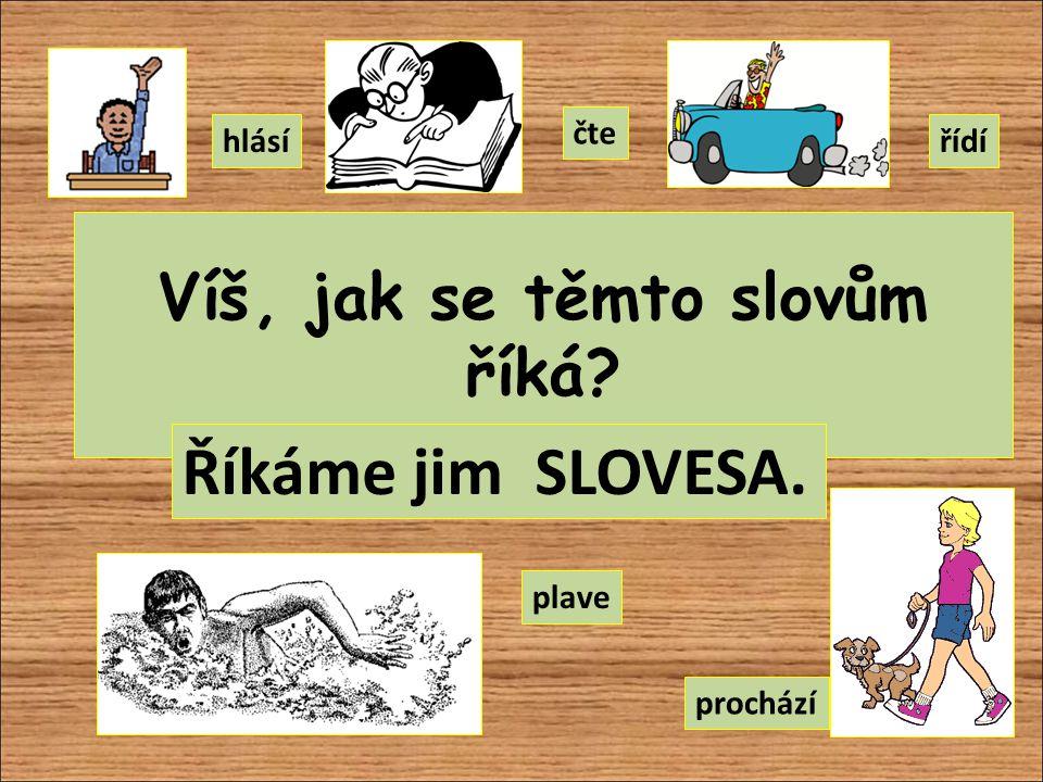 Víš, jak se těmto slovům říká? Říkáme jim SLOVESA. hlásí čte řídí plave prochází
