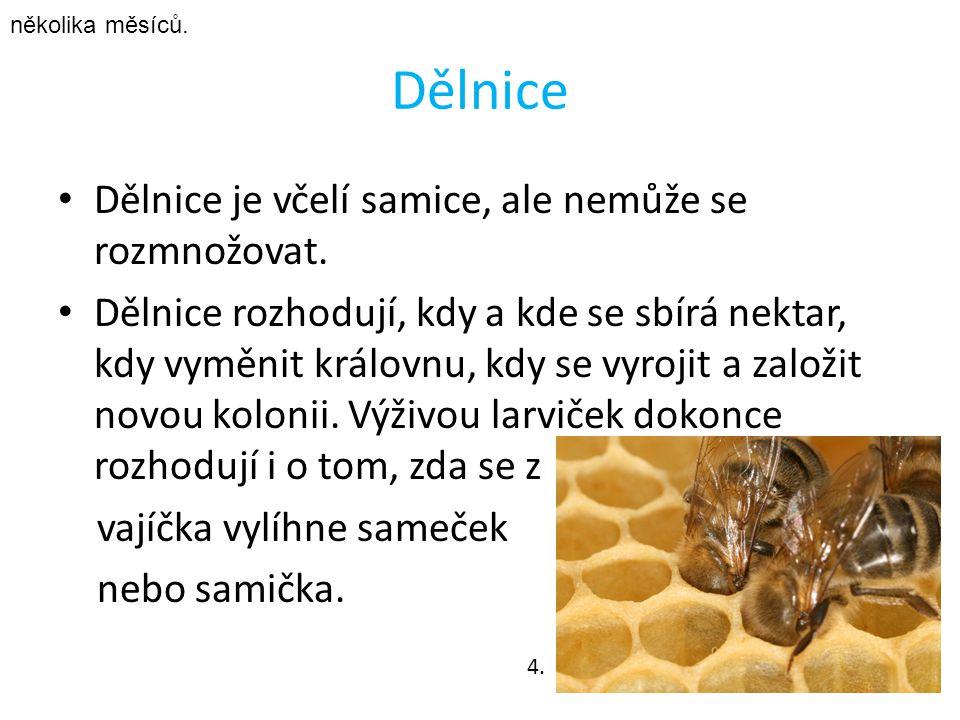 Příbuzné druhy Drvodělka Čalounice Pískorypka Včela divoká Včela kukaččí 16.