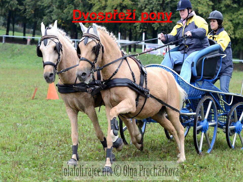Dvospřeží pony