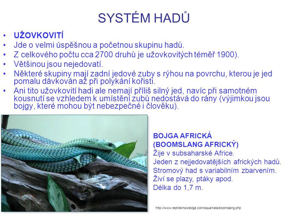 SYSTÉM HADŮ UŽOVKOVITÍ Zahrnují ekologicky rozmanité typy.
