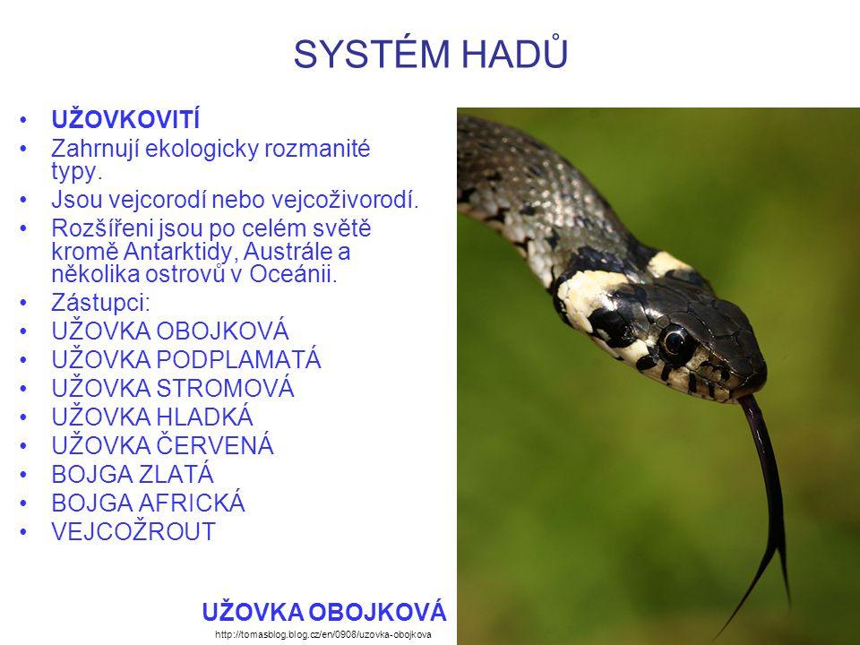 SYSTÉM HADŮ UŽOVKOVITÍ Zahrnují ekologicky rozmanité typy. Jsou vejcorodí nebo vejcoživorodí. Rozšířeni jsou po celém světě kromě Antarktidy, Austrále