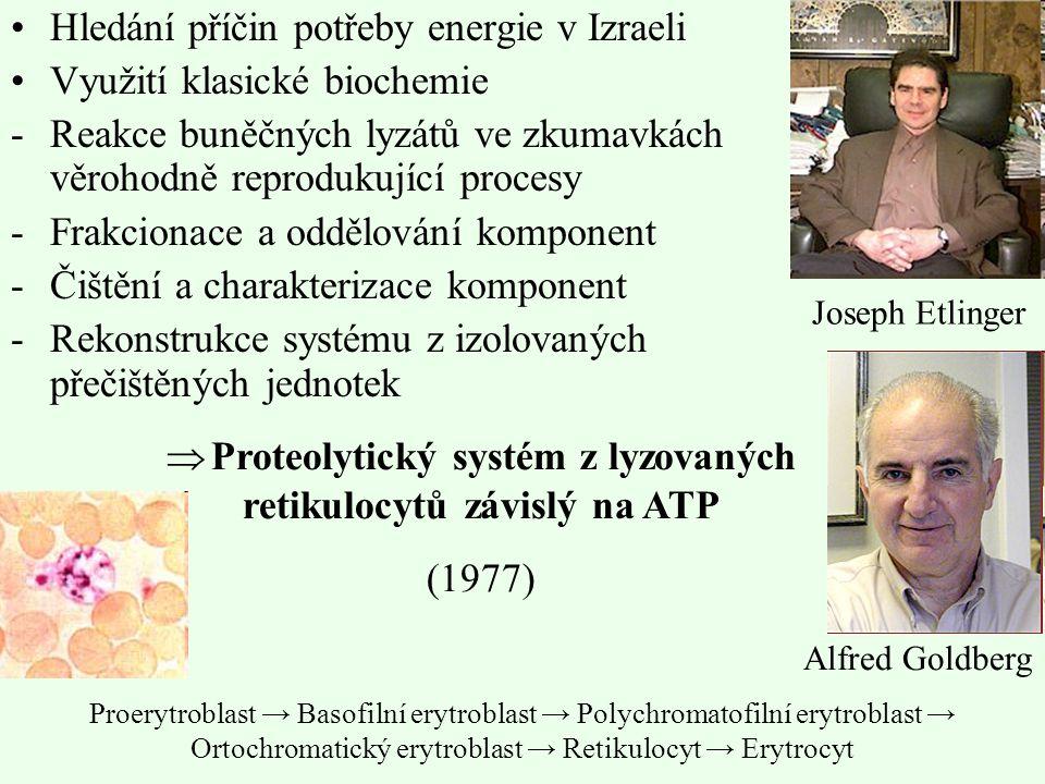 Hledání příčin potřeby energie v Izraeli Využití klasické biochemie -Reakce buněčných lyzátů ve zkumavkách věrohodně reprodukující procesy -Frakcionac