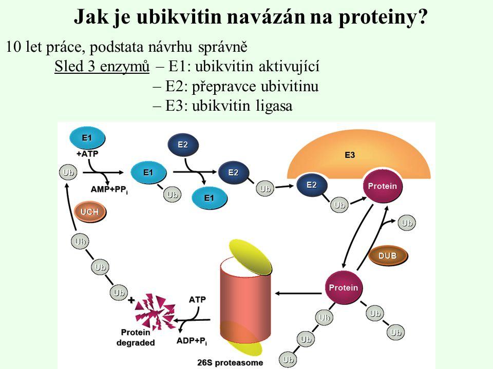 Funkce enzymů E1 zajistí aktivaci karboxylového konce glycinového zbytku ubikvitinu pomocí ATP a následuje připojení aktivovaného ubikvitinu do thiolového vazebného místa enzymu E1 thioleserovou vazbou Transacylací je aktivovaný ubikvitin přesunut do SH místa enzymu E2, který přenese ubikvitin až k – NH 2 skupině cílového proteinu Navázání na protein probíhá pomocí enzymu E3, který je substrátově specifický Velký počet E3 enzymů