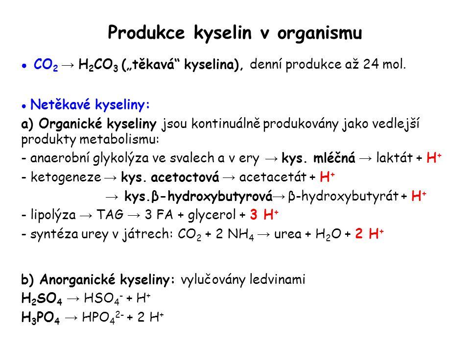 """Produkce kyselin v organismu ● CO 2 → H 2 CO 3 (""""těkavá"""" kyselina), denní produkce až 24 mol. ● Netěkavé kyseliny: a) Organické kyseliny jsou kontinuá"""