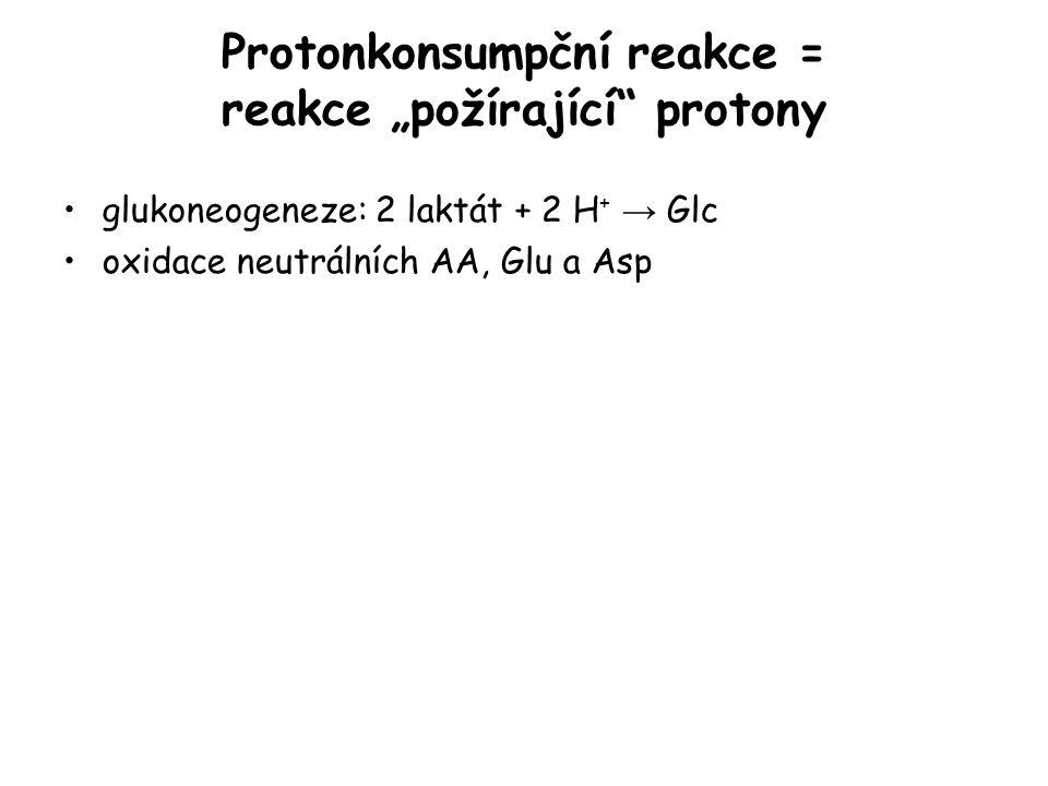 """Protonkonsumpční reakce = reakce """"požírající"""" protony glukoneogeneze: 2 laktát + 2 H + → Glc oxidace neutrálních AA, Glu a Asp"""