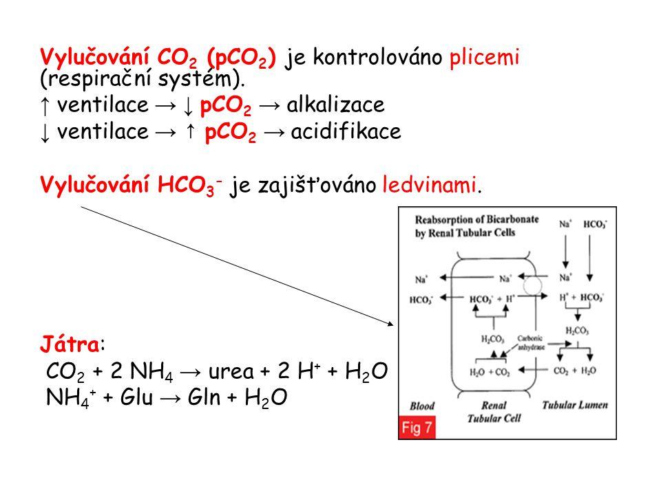 Vylučování CO 2 (pCO 2 ) je kontrolováno plicemi (respirační systém). ↑ ventilace → ↓ pCO 2 → alkalizace ↓ ventilace → ↑ pCO 2 → acidifikace Vylučován