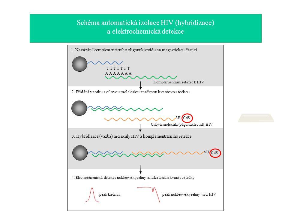 Schéma automatická izolace HIV (hybridizace) a elektrochemická detekce CdS 4. Electrochemická detekce nukleové kyseliny and kadmia z kvantové tečky Ko