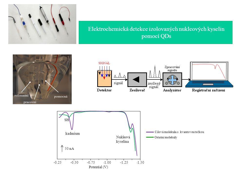 Elektrochemická detekce izolovaných nukleových kyselin pomocí QDs Potential (V) - 1.50-1.25 - 1.00-0.75-0.50-0.25 50 nA kadmium Nukleová kyselina SH SIGNÁL Cílová molekula s kvantovou tečkou Ostatní molekuly