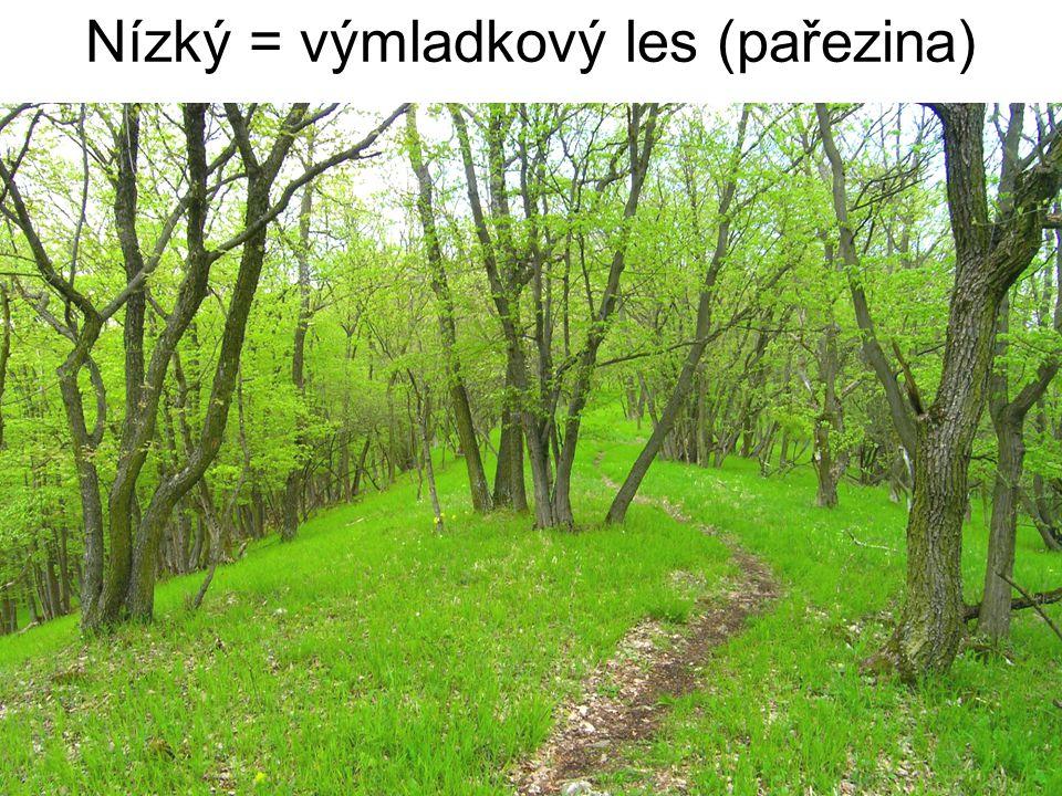 Nízký = výmladkový les (pařezina)