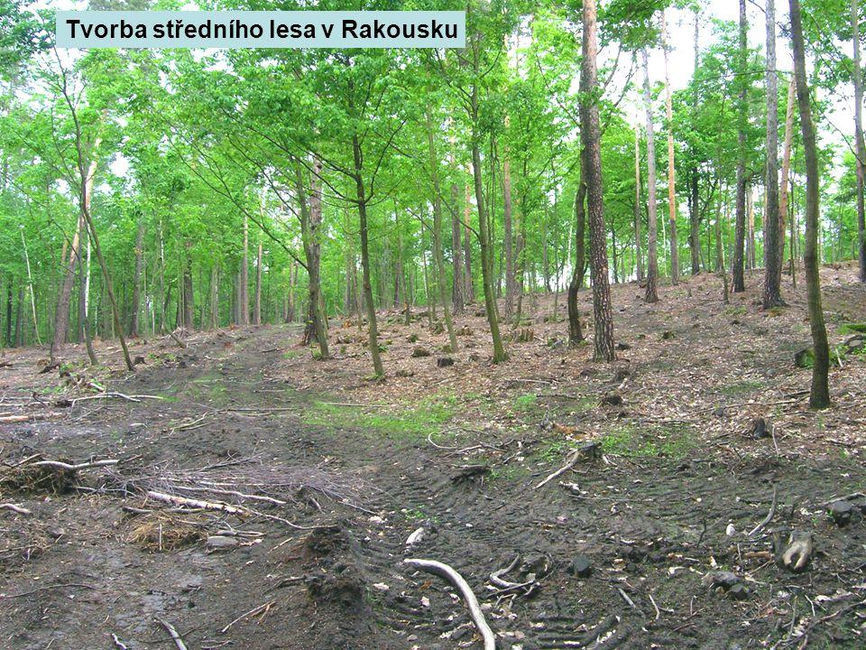 Tvorba středního lesa v Rakousku