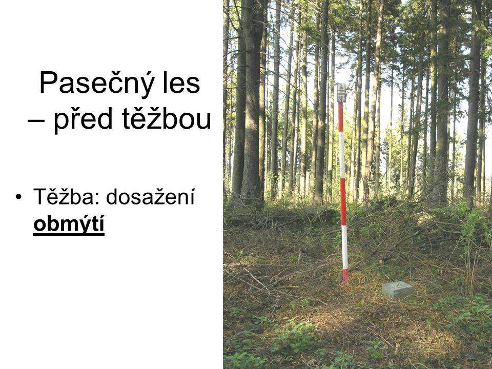 Pasečný les – před těžbou Těžba: dosažení obmýtí