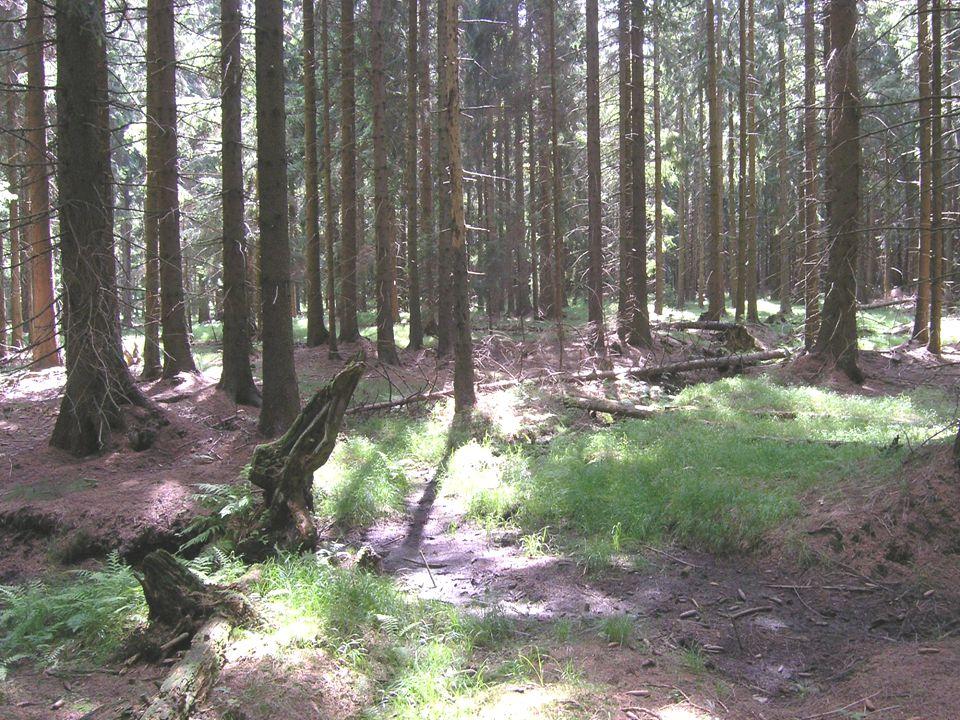 Lesy ochranné – sutě, skály