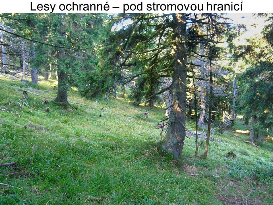 Lesy ochranné – pod stromovou hranicí