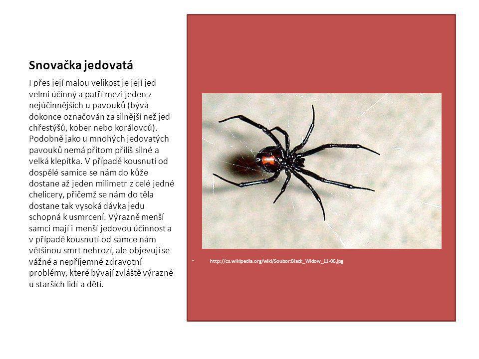 Snovačka jedovatá http://cs.wikipedia.org/wiki/Soubor:Black_Widow_11-06.jpg I přes její malou velikost je její jed velmi účinný a patří mezi jeden z nejúčinnějších u pavouků (bývá dokonce označován za silnější než jed chřestýšů, kober nebo korálovců).