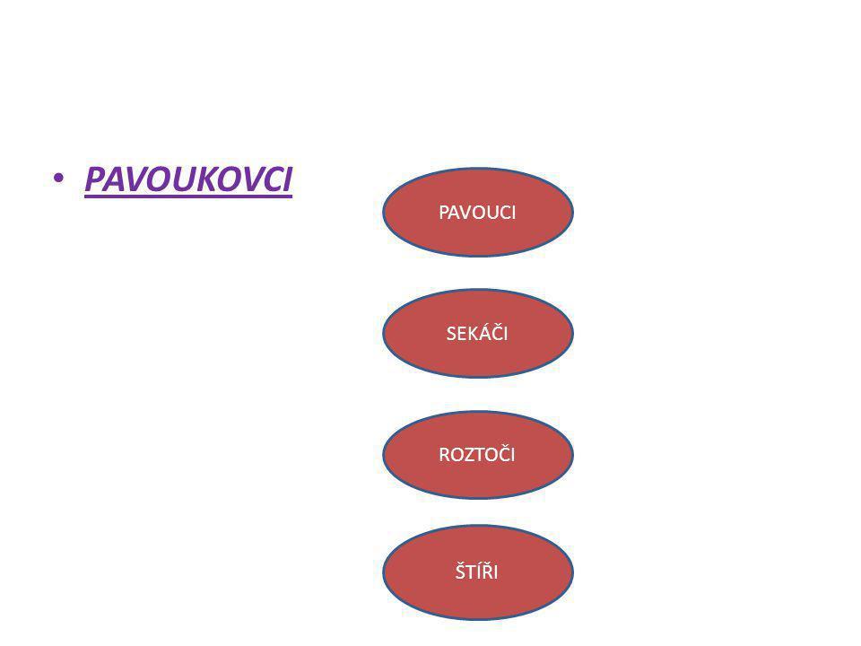 PAVOUCI zadeček stopka hlavohruď končetiny http://cs.wikipedia.org/wiki/Pavouci