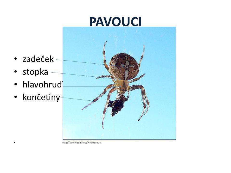 Stavba těla pavouků HLAVOHRUĎ HLAVOHRUĎ Klepítka Klepítka - k přijímání potravy.