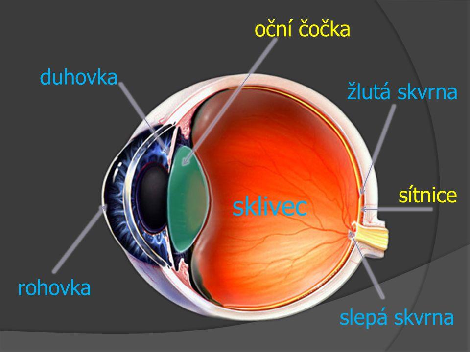 sklivec duhovka oční čočka rohovka žlutá skvrna slepá skvrna sítnice